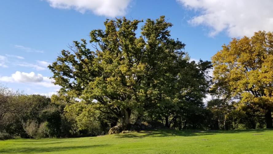 diapo 8 arbre rocher branlant