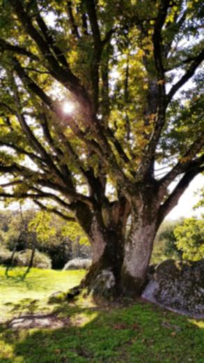 diapo 4 arbre 2 rocher branlant